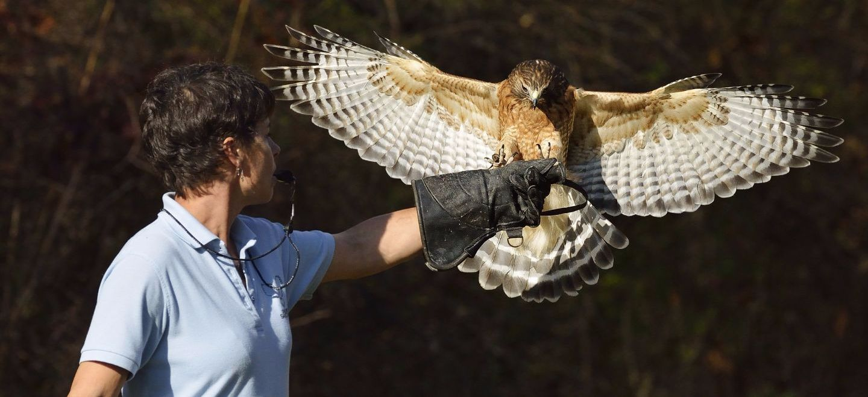 Image result for ohio bird sanctuary